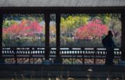 3月11日 ,位於福州的福建農林大學校內鮮花盛開,春意盎然。 (新華社)