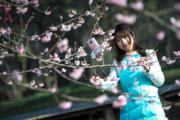3月9日,2018武漢東湖櫻花節在武漢東湖櫻園開幕。(新華社)