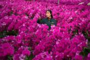 3月9日,長安區西安鮮花港在溫室內種植的蝴蝶蘭。(新華社)