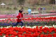 3月10日,貴州省貴定縣金海雪山景區鬱金香綻放,形成花海。(新華社)