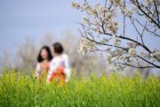 3月10日,陝西省安康市旬陽縣段家河鎮櫻桃灣內的櫻桃花競相綻放,吸引許多遊客前來觀賞。(新華社)