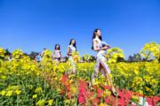3月10日,湖南瀏陽舉行首屆「古風洞」杯油菜花地走秀旗袍賽。(新華社)