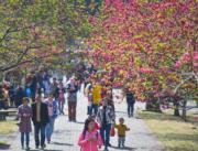 3月11日,位於福州的福建農林大學校內鮮花盛開,春意盎然。(新華社)