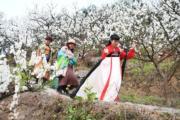 3月12日,重慶市北碚區澄江鎮上馬臺村的李花迎來盛花期。(新華社)