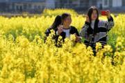 3月10日,江西省萍鄉市第五屆鄉村旅遊節在湘東區東橋鎮萬畝油菜花基地開幕。(新華社)