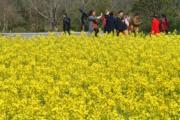 3月10日,西省萍鄉市第五屆鄉村旅遊節在湘東區東橋鎮萬畝油菜花基地開幕。(新華社)