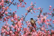 3月20日,在貴州省畢節市一公園,小鳥在枝頭停留。(新華社)