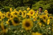 3月12日,市民在深圳市民中心南廣場的向日葵花園遊玩拍照。 (新華社)
