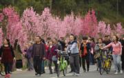 3月18日,四川樂山城區的綠心遊道上,民眾踏春賞花忙。(中新社)