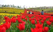 3月21日,江西新余市仙女湖區凱光植物園內各種鬱金香美麗綻放,七色花田成為春天一道亮麗風景。(中新社)