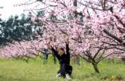 3月22日,一名遊人在江西省永修縣雲鳳凰山的桃花樹下拍照留影。(中新社)