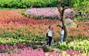 3月21日,遊客在廣西南寧青秀山風景區內賞花拍照。(新華社)