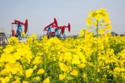 3月22日,採油機在江蘇海安盛開的油菜花叢中工作。 (新華社)