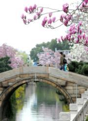 3月16日,路人在江蘇蘇州幹將河邊賞花。(新華社)