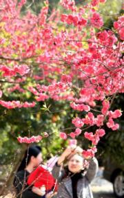 3月3日,人們在湖南省邵陽市丹口鎮桃林村觀賞桃花。(新華社)