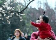 3月4日,遊客在南京梅花山賞梅。(新華社)