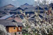 3月3日,貴州省劍河縣一村寨旁的春花開。(新華社)