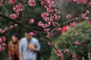 2月23日,人們在吉首市民廣場梅園中賞梅。(新華社)