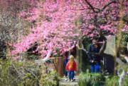 2月23日,遊客在浙江省寧波市天一閣月湖景區內賞梅。(新華社)