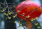 2月19日,安徽省六安市九墩塘公園降下春雨,梅花綻放於其中。(新華社)
