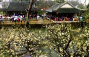 2月19日,遊客在江蘇蘇州拙政園內賞花。(新華社)