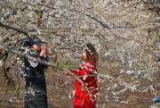 2月5日,在廣西賀州市一片李花盛開,不少人前來賞花拍照。(新華社)