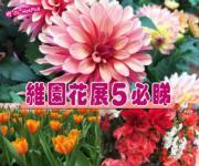 【好去處‧有片睇】維園花展 5大必影場景 大麗花最艷