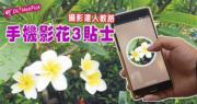 【維園花展】攝影達人教路 手機影花3貼士:貼近主體‧較光啲‧葉做背景