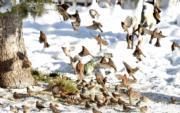 2018年12月19日,在布達拉宮廣場雪地上的小鳥(新華社)