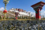 雪後拉薩──布達拉宮外的松枝覆蓋着積雪(新華社)