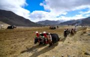 2018年3月17日,藏曆正月三十,西藏春耕大典 (新華社)