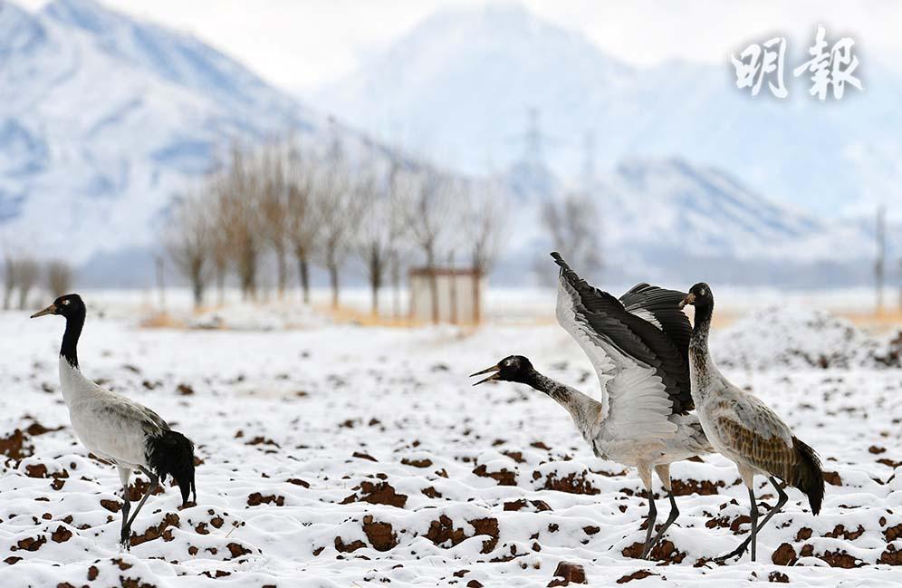 西藏,不一樣的情懷:鶴舞雪域‧春到拉薩‧背鼓跳神