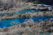 2018年2月11日,地震半年後,九寨溝生態美景慢慢恢復。圖為樹正群海。(中新社)