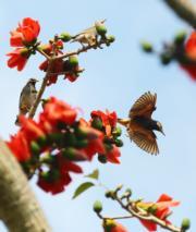 鳥兒展翅高飛(新華社)