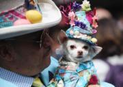 【復活節花帽巡遊——紐約】有民眾帶同寵物同行,更為狗狗戴花帽。(新華社)