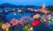 武漢東湖櫻園夜景(新華社)