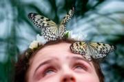 倫敦自然歷史博物館「奇異蝴蝶展」(法新社)