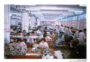 【香港百年蛻變】1960年代後期香港紡織業和製衣業得到很大成功,當時輸出的紡織品和成衣,佔1960年代本地產品出口總值51%以上。圖為製衣廠內工人工作情況,攝於1964年。(圖片及資料由饒宗頤文化館提供)