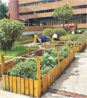 城市農耕×升級再造