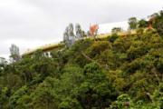 黃金橋位處於山坡植被間。(法新社)