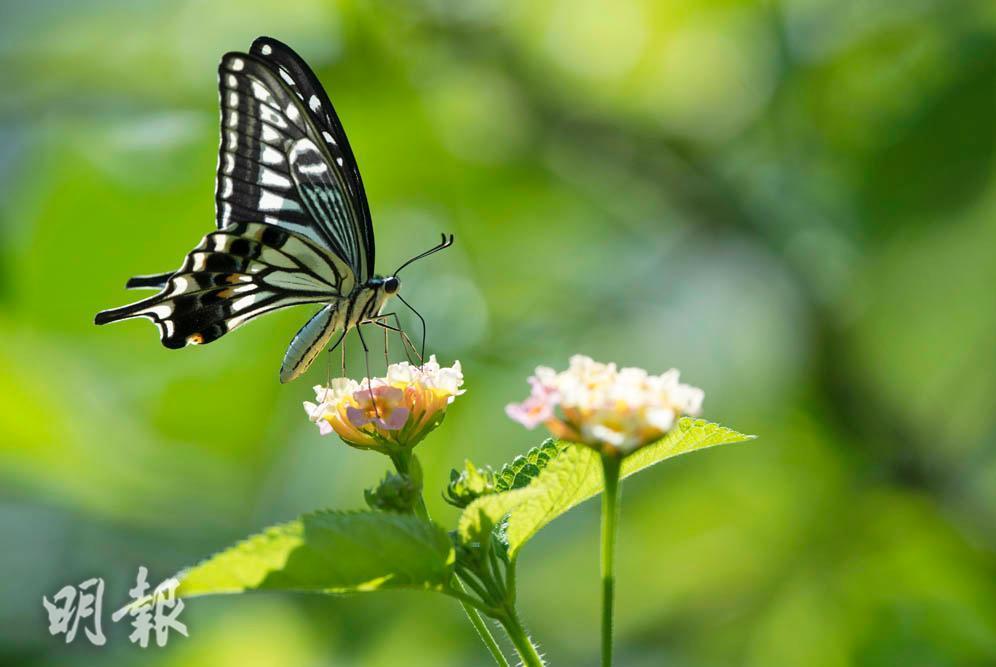 蜂蝶花中舞