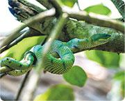 沙巴探索森林日與夜 觀毒蛇覓珍稀懶猴
