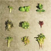 綠色生活:微菜苗成就大志 紓緩糧食危機