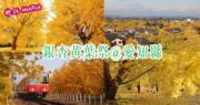 日本旅遊:銀杏黃葉祭@愛知縣稻澤市 試食‧舞蹈表演‧銀杏樹亮燈
