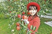 蘋果樹下  領悟青森香甜引力