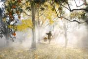 2018年11月25日,在江蘇省蘇州市東山鎮,一位果農走在晨霧籠罩的果園中。(新華社)