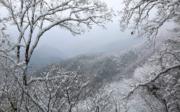 2018年11月8日,鬼谷嶺國家森林公園的雪景。(新華社)