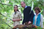 2016年9月26日,威廉與凱特走進大熊雨林(Great Bear Rainforest)觀賞自然生態。(法新社)