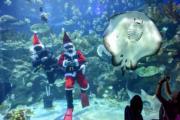 【世界各地迎聖誕】馬來西亞吉隆坡的水族館內,潛水員打扮成「聖誕老人」。圖片攝於2018年12月21日。(新華社)