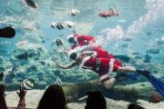 【世界各地迎聖誕】在南非的海洋主題公園內,潛水員打扮成「聖誕老人」與遊客互動。圖片攝於2018年12月20日。(法新社)